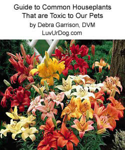 Guide to Common Houseplants that are Toxic to Our Pets