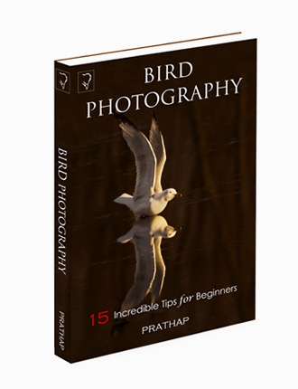Click here to read / download - 15 Incredible Bird Photography Tips for Beginners