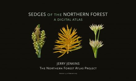 Sedges of the Northern Forest – A Digital Atlas